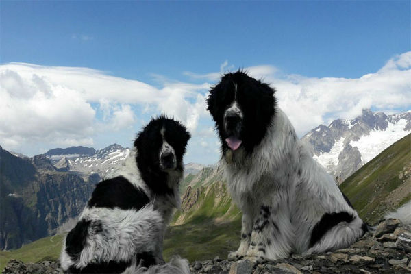 due cani in montagna