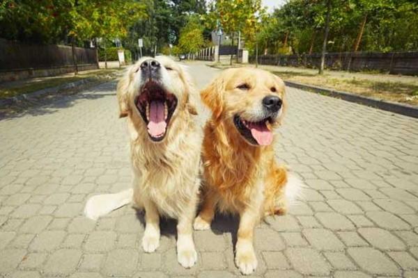 cani felici insieme