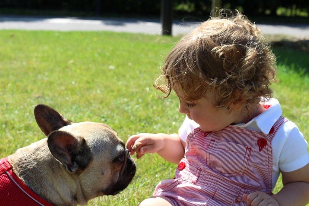Cane Budu con bambino