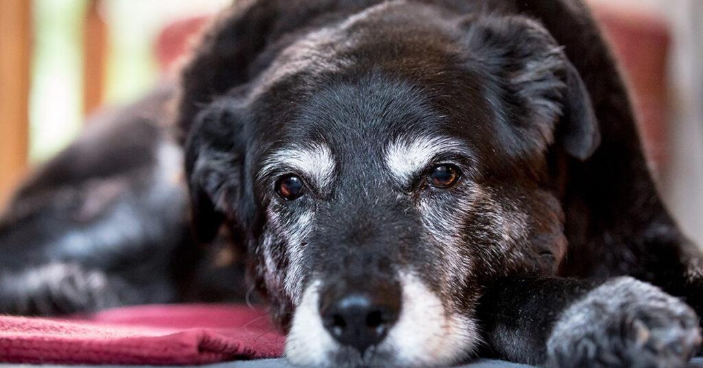 In Australia se non porti il cane fuori ogni giorni ti multano