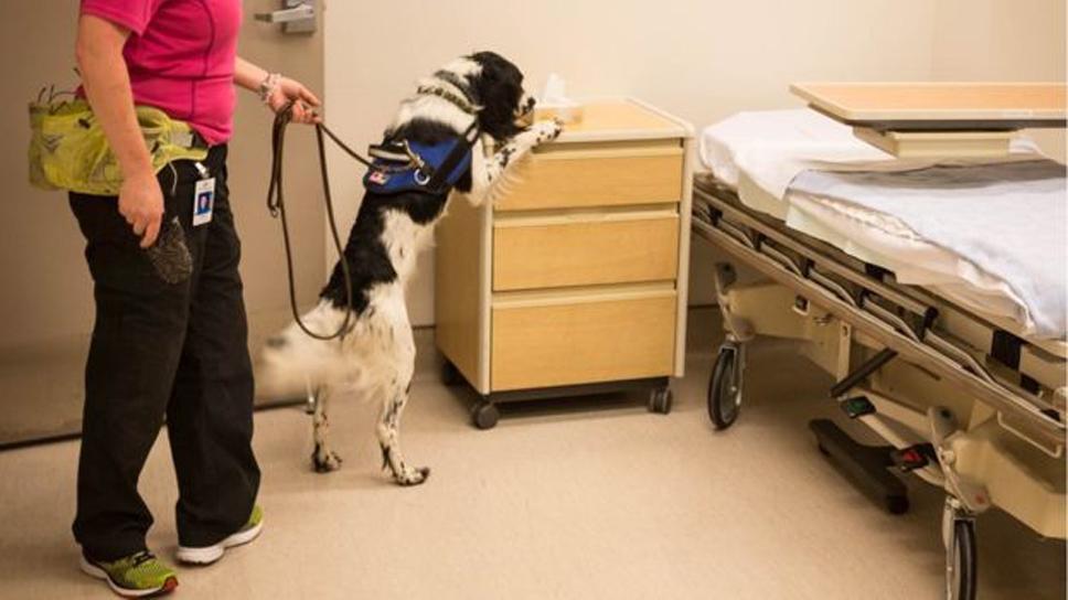 Cane che annusa in ospedale