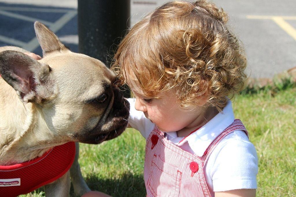 Cane che annusa un bambino