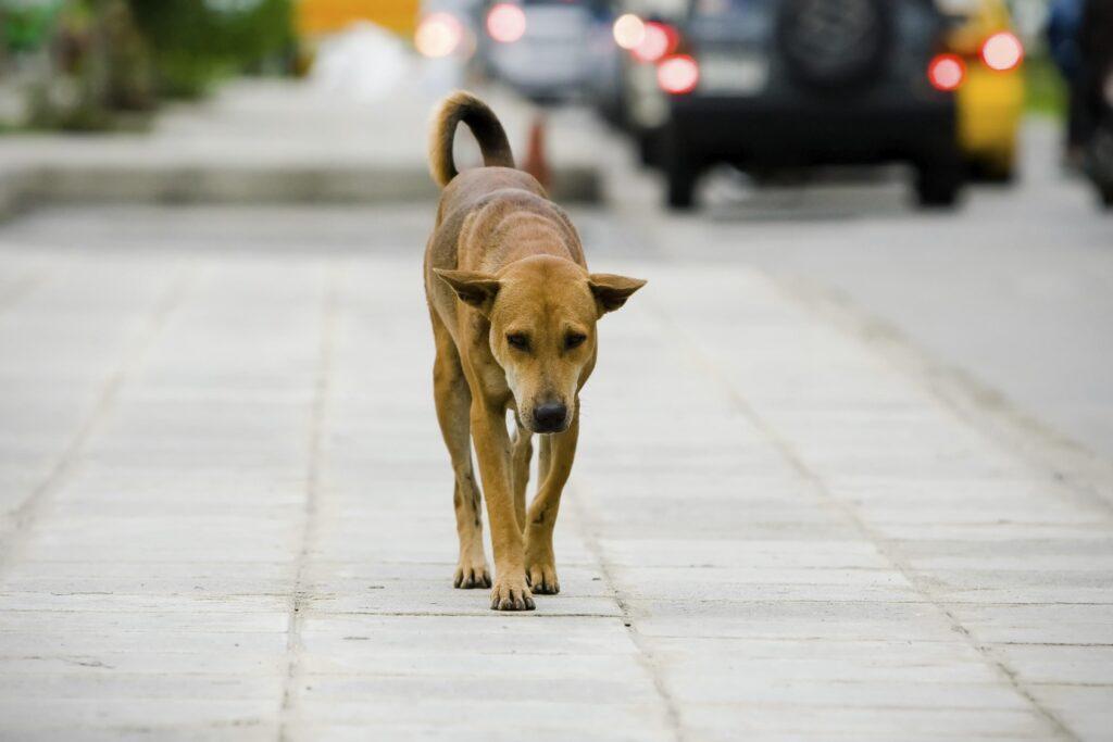 Salsomaggiore: cane abbandonato in casa mentre i proprietari sono in vacanza
