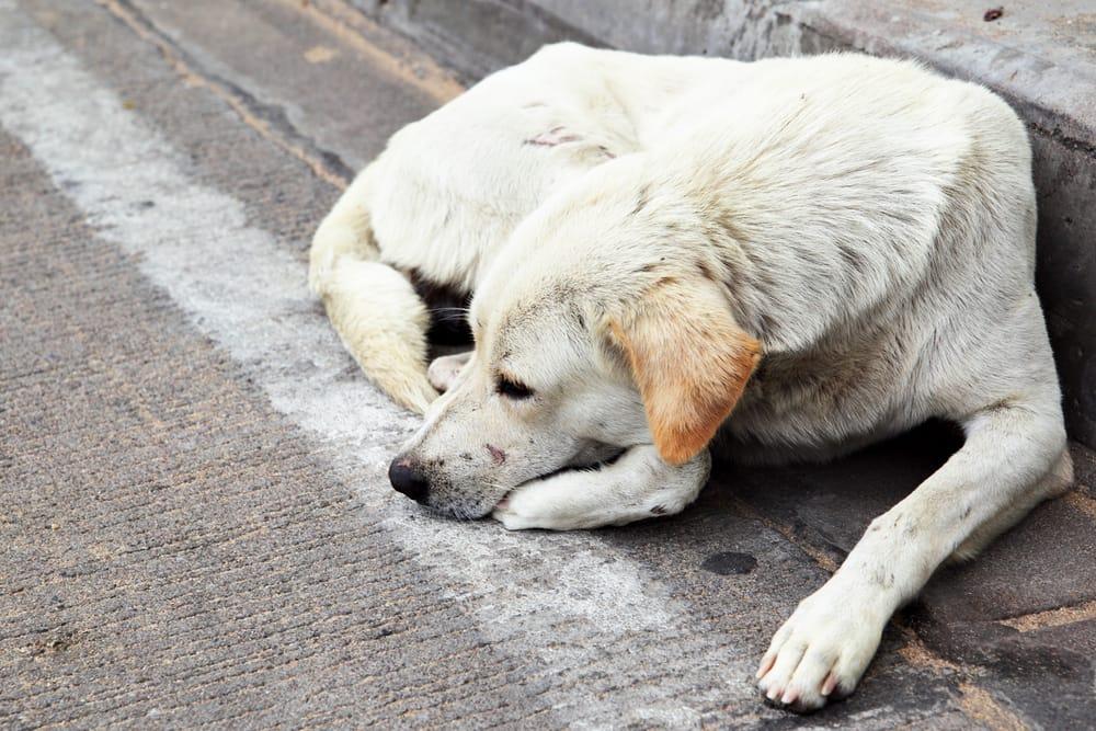 Cane che dorme per strada