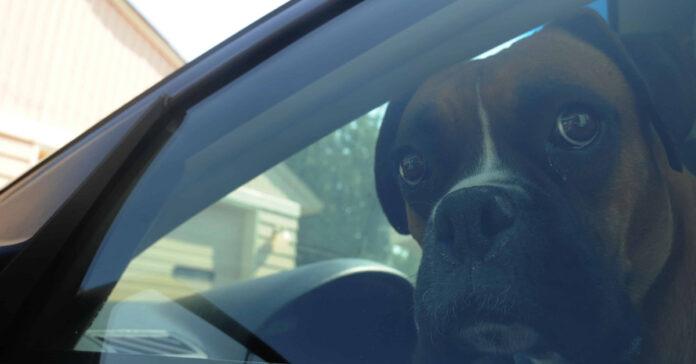 Cane che guarda dal finestrino della macchina