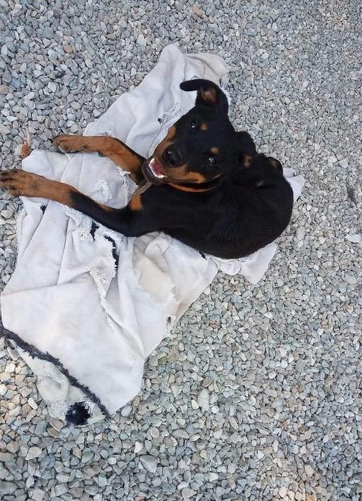 Benevento: cane lanciato da macchina in corsa