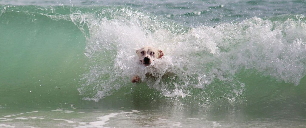 Pesaro: il cane fa il bagno in mare, il proprietario si becca una bella multa