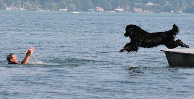 Cane che salva uomo in mare