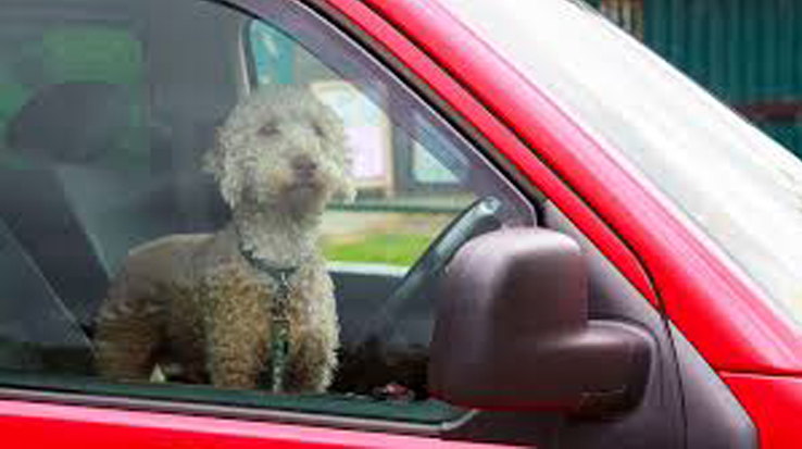 Cane chiuso dentro un'automobile