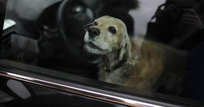 Cane chiuso dentro una macchina