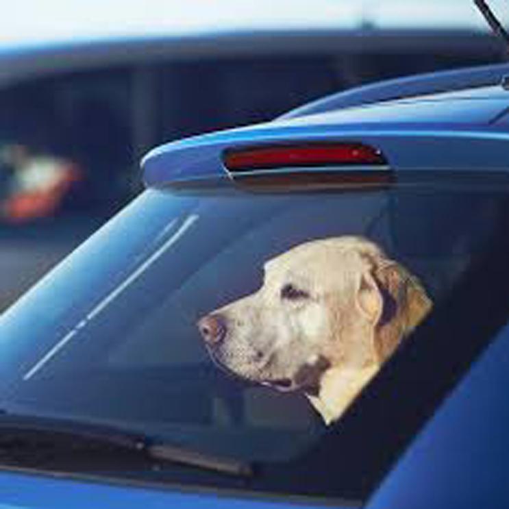 Cane chiuso dentro un'auto