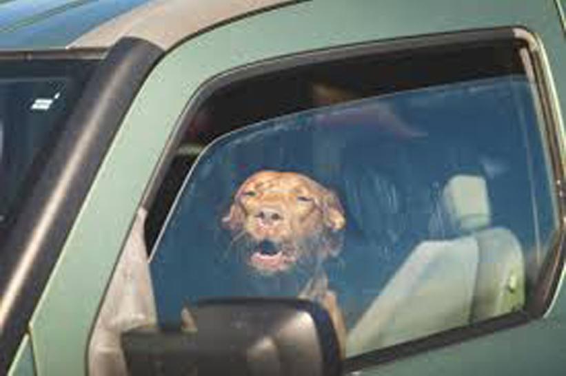 Palermo: tre cani lasciati in un furgone sotto il sole