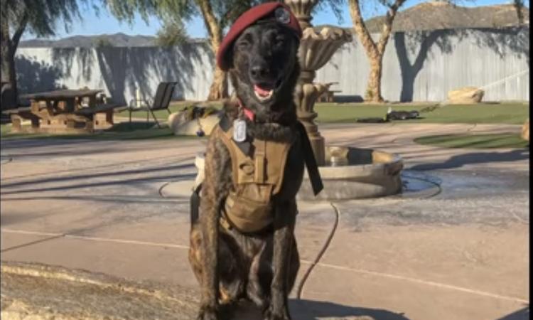 Cane con cappello da militare