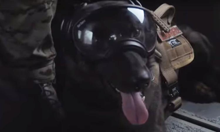 Cane con occhiali da paracadutista