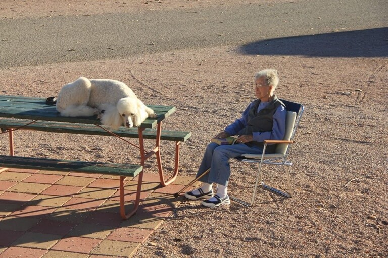 Cane con una donna anziana