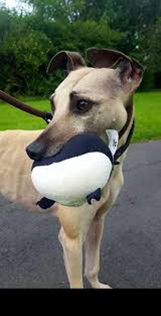 Sam, il cane che aspetta una famiglia da 900 giorni