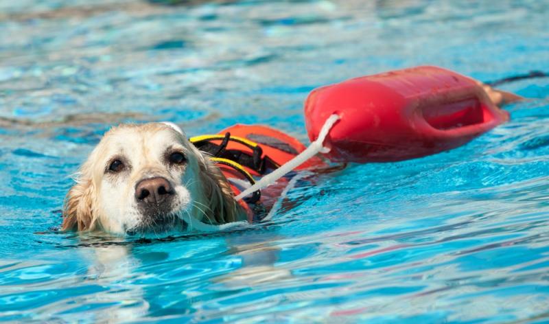 Cane da salvataggio in acqua
