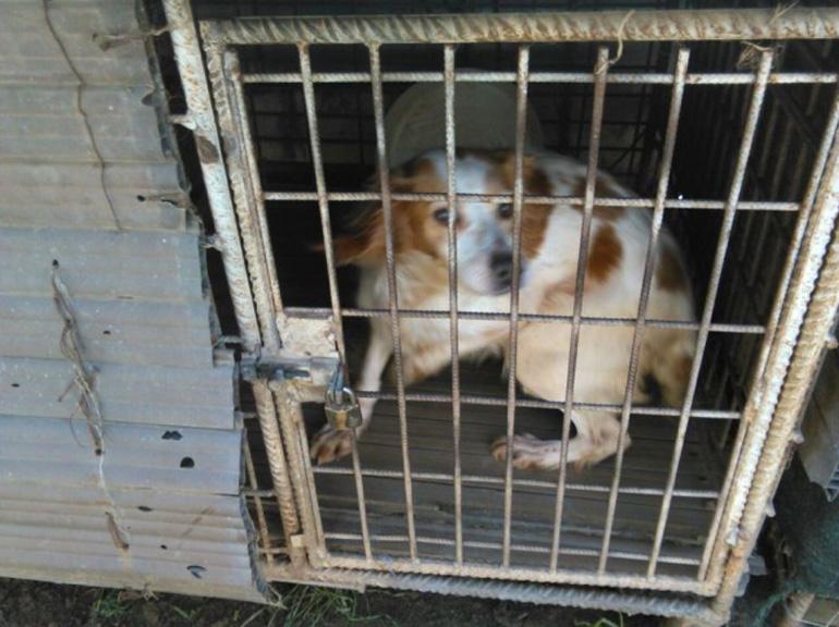 Cane dentro una gabbia