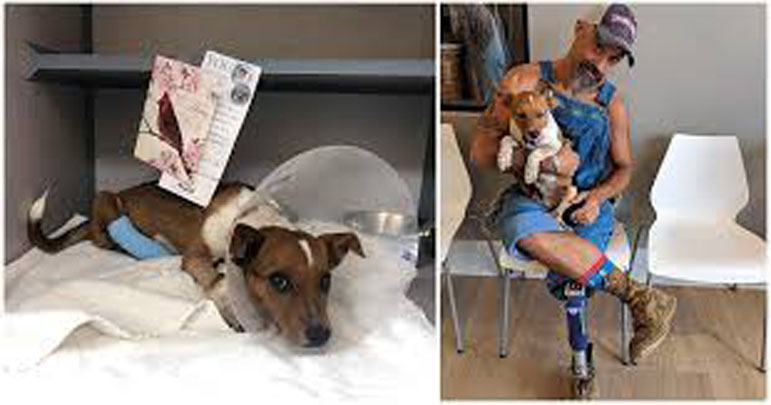 Cane disabile insieme ad un veterano di guerra