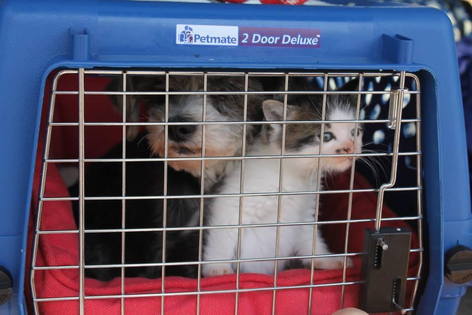 Cane e gatto in un trasportino