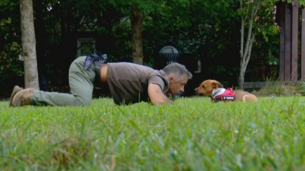 Cane e uomo sdraiati nel prato