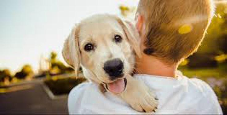 Rose (Cosenza): se adotti un cane, le tasse sono scontate