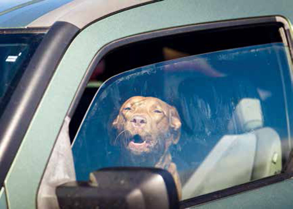 Cane in auto sotto il sole