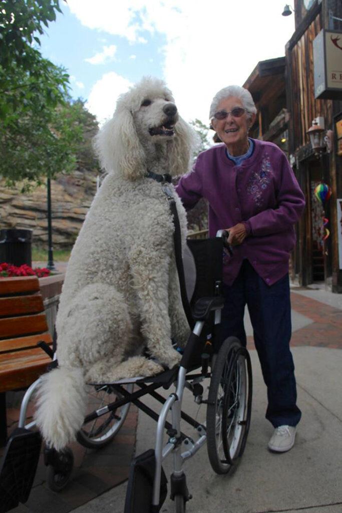 Cane insieme ad una donna anziana