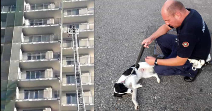 Cane lasciato sul balcone a Milano