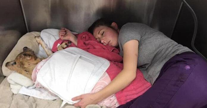 Cane malato che dorme abbracciato ad una donna