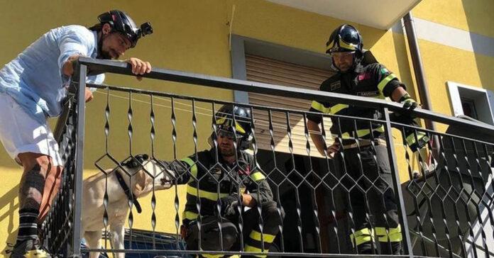 Cane salvato da un balcone