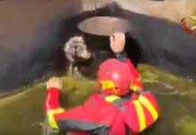 Cane salvato da un vigile del fuoco