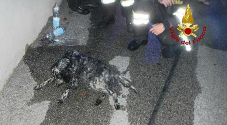 Feltre, cane privo di sensi a causa di un incendio: salvato dai Vigili del Fuoco