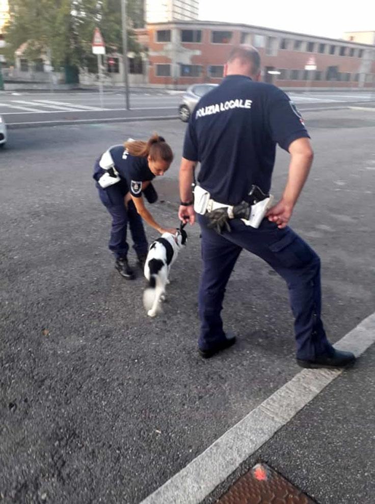 Milano: cane lasciato in un balcone al 12 piano sotto il sole