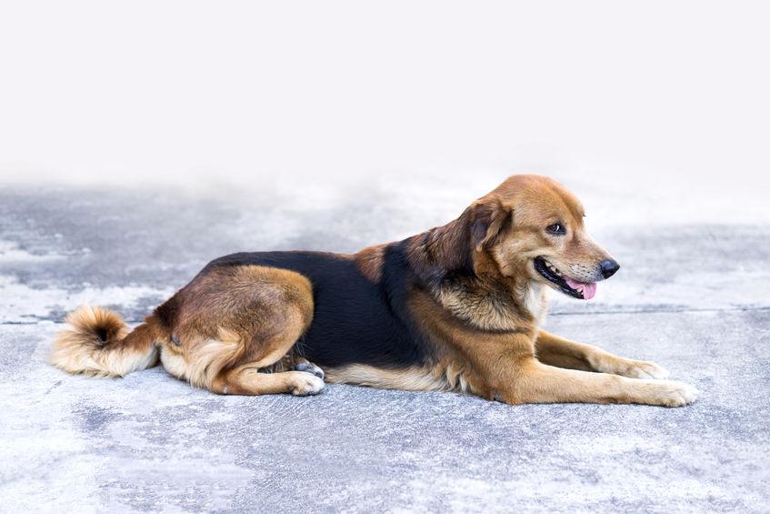 Napoli, cane travolto da un treno. È polemica per i soccorsi in ritardo