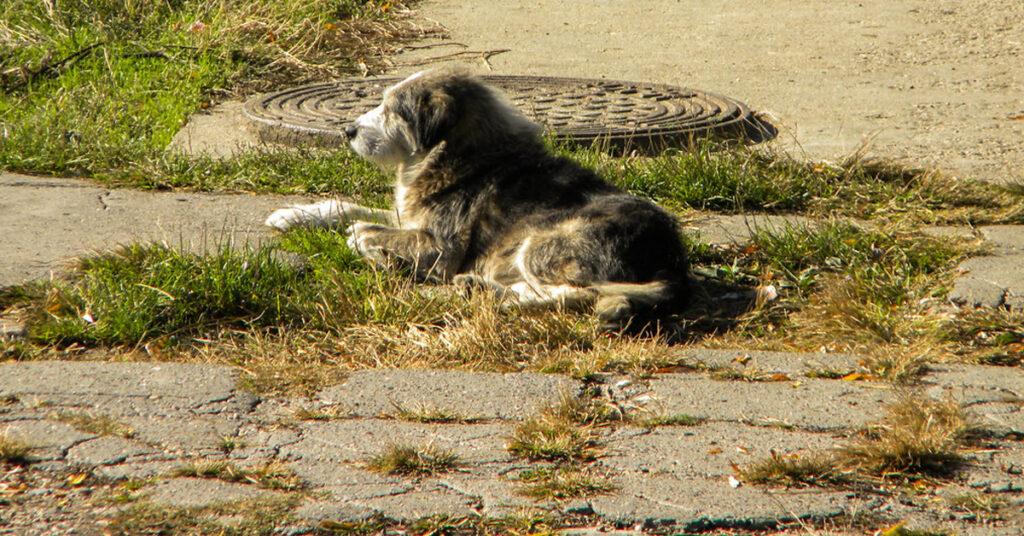 Cane sdraiato per la strada