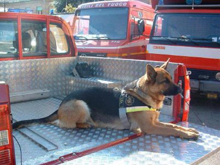 Cane su furgone dei vigili del fuoco