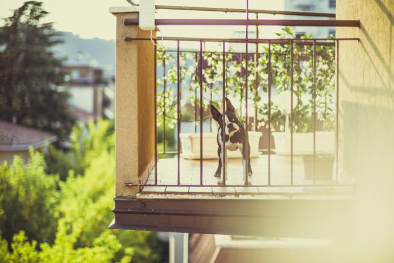 Cane su un balcone