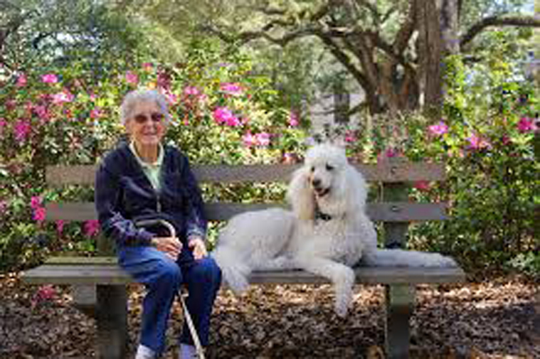 Cane su una panchina insieme ad una donna