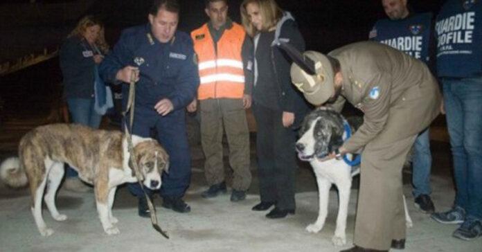 Cani Bruno e Chiara