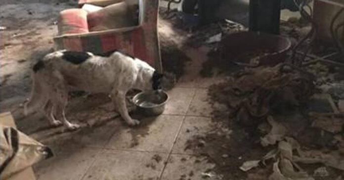 Cani che vivono in una discarica