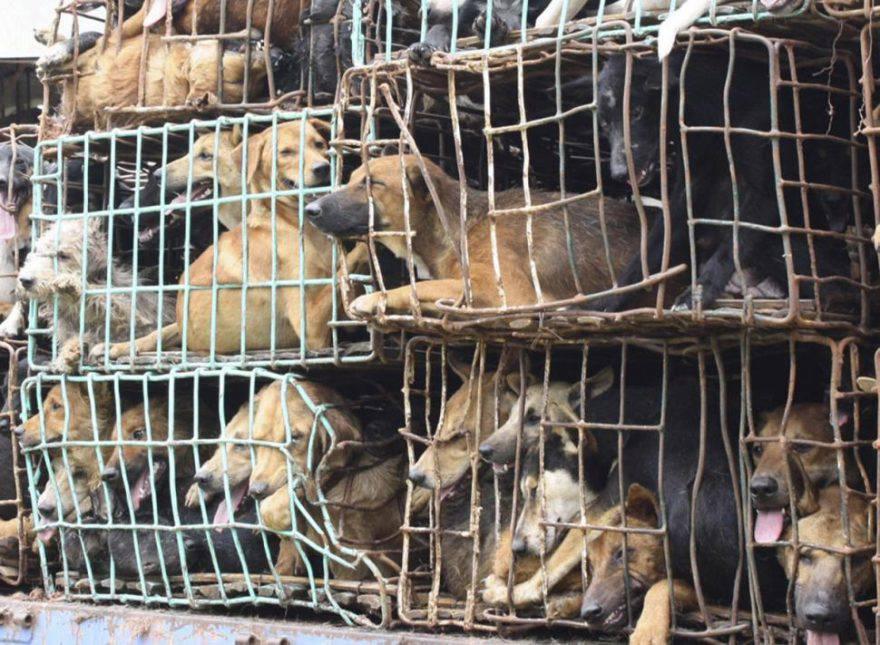 Cani dentro le gabbie