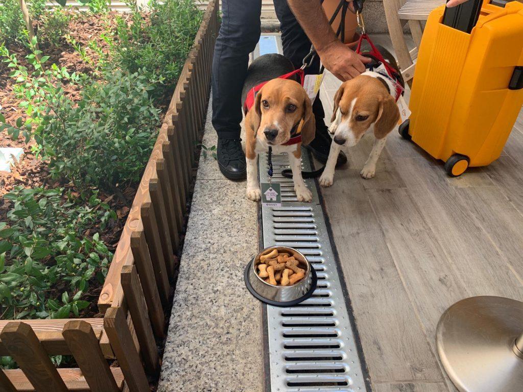 Cani in partenza