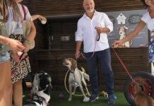 Cani insieme ai loro proprietari