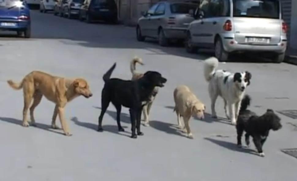 Sassano (SA): tre cani hanno perso la vita per colpa di polpette avvelenate
