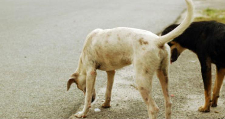Enna: cane randagio ferito da un uomo infastidito dalla sua presenza
