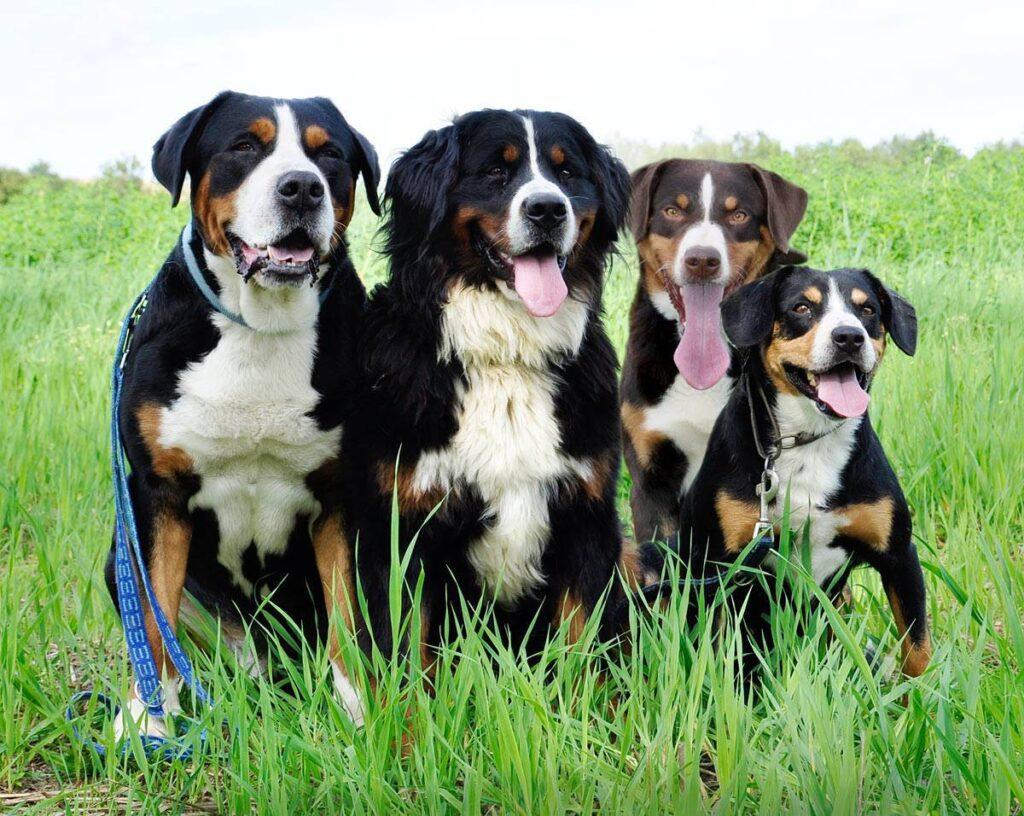 Cani seduti che guardano