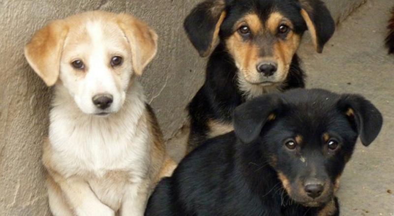 Cuccioli di cane in canile