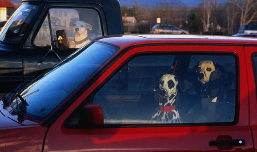 Due cani dentro un'automobile