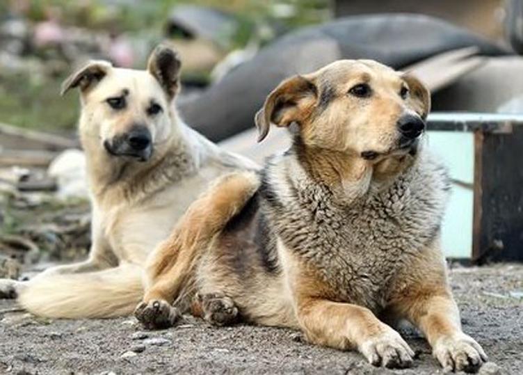 Palermo: cane Ruth perde la vita per la violenza di un uomo